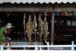Geschlachtete Krokodile, im Verkaufsraum gab es Gürtel und Taschen aus Krokodil- und auch Schlangenleder.