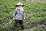 Während der Trockenzeit werden auf den Reisfeldern auch Kartoffeln und andere Gemüse angebaut.