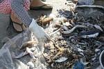 Der magere Fang liegt auf einer Plastikbahne, bereit zur Sortierung.