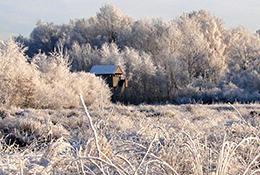 Das Emsdettener Venn verzaubert auch im Winter mit seiner einzigartigen Schönheit